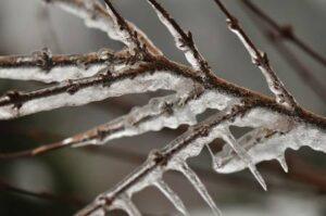Ice buildup on tree branch