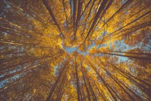 Fall Tree Service